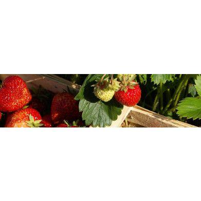 Grøn Jordbær